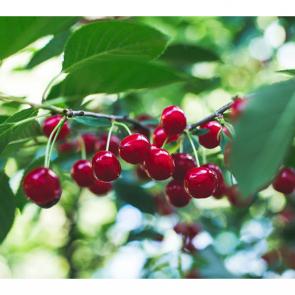 Еда ягоды 10754