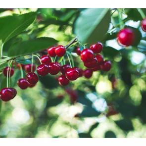 Еда ягоды 10755
