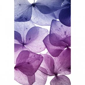 Фиолетовые лепестки