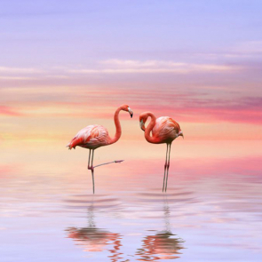 Фламинго 5806