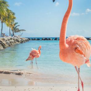 Фламинго 5805