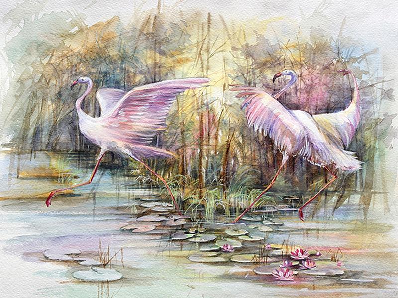 Фламинго акварелью 2434