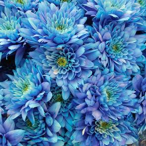 Голубоы букет