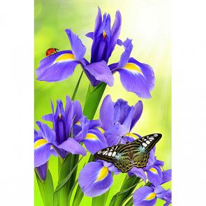 Ирис с бабочкой