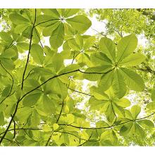 Контуры листьев