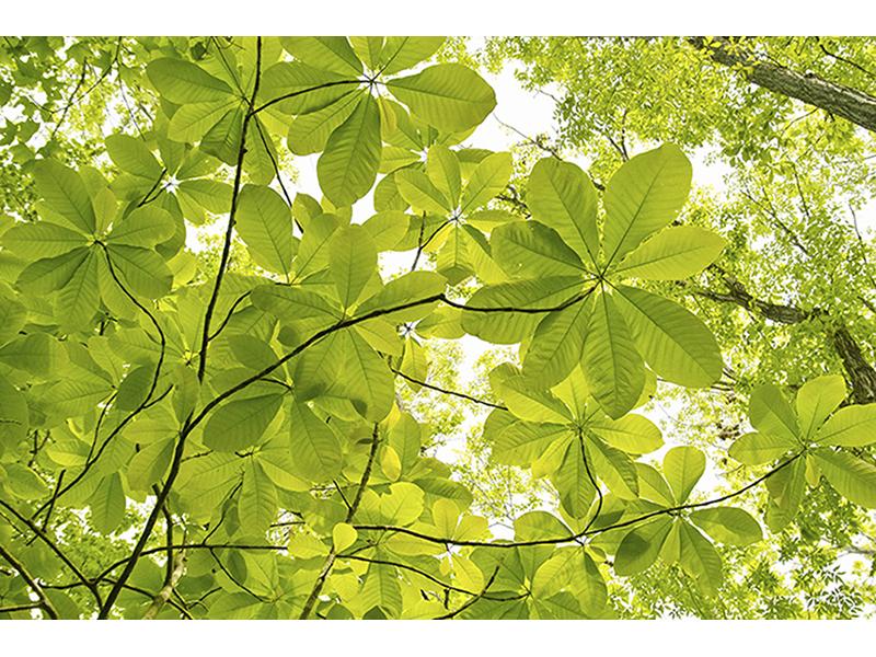 Контуры листьев 1629