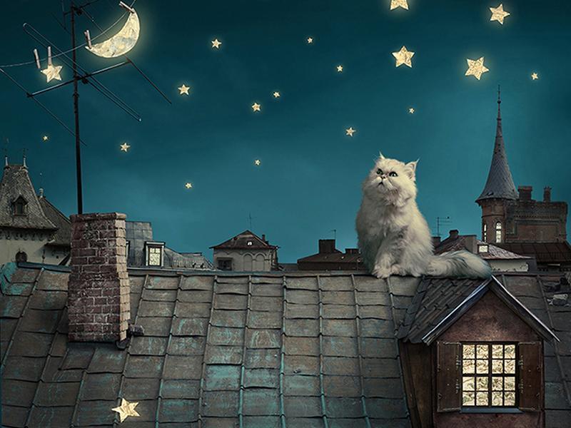 Кот на крыше 2281
