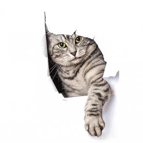 Кот в стене