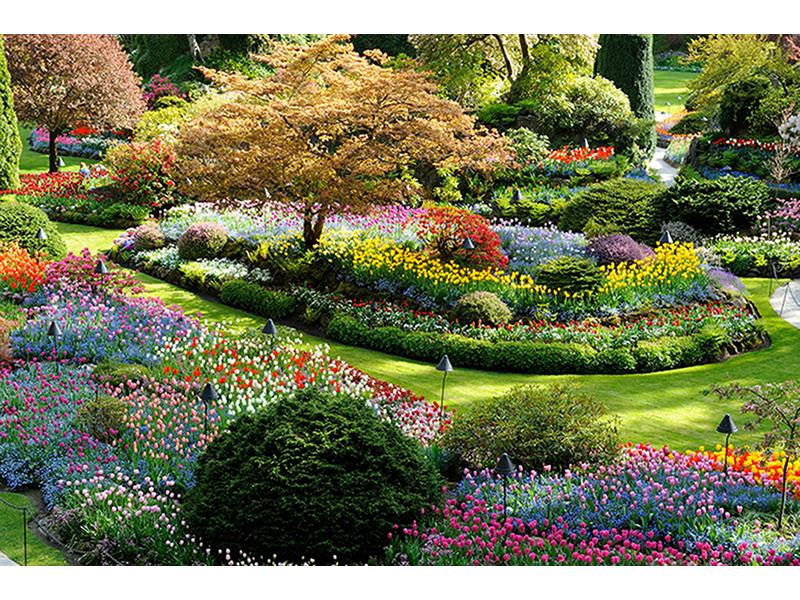 Красивый сад 1621