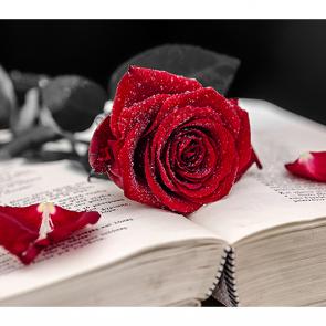 Красная роза на книге