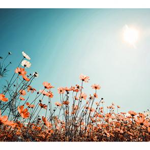 Красное поле