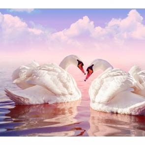 Лебеди 5552