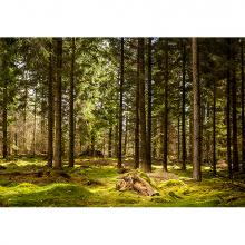 Глухой лес