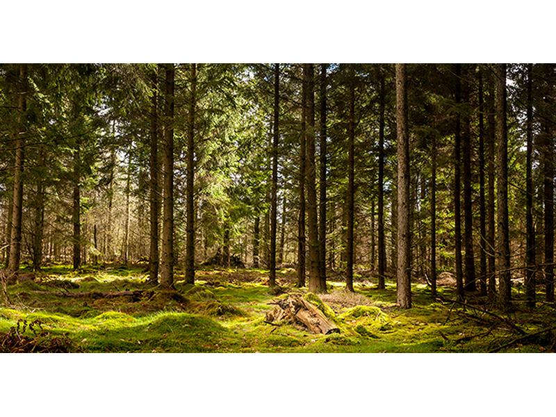 Глухой лес 1592