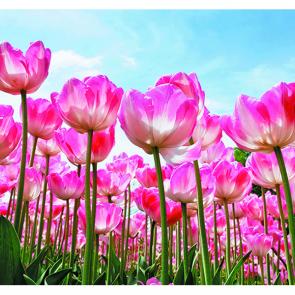 Лес тюльпанов