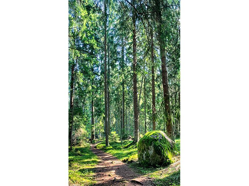 Лес в Финляндии 1586