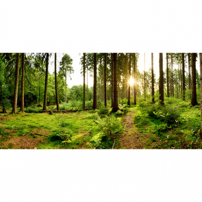 Лес в Германии