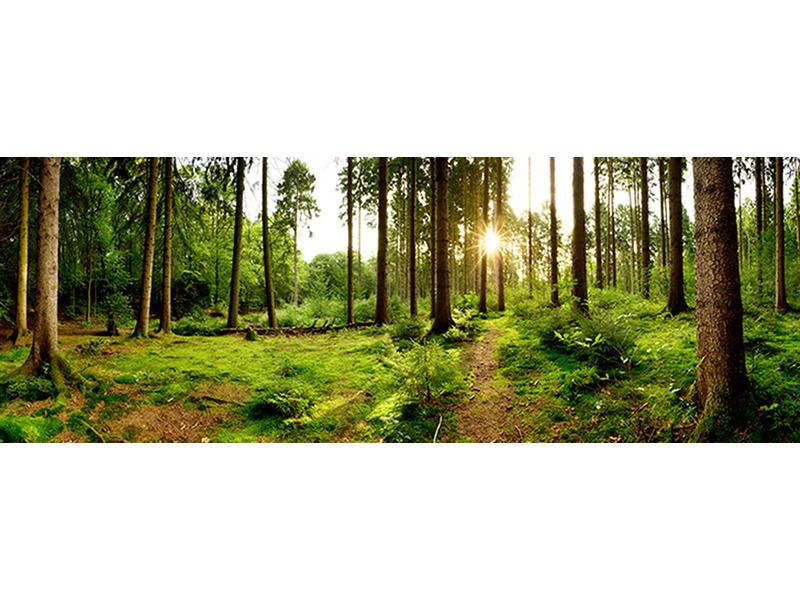Лес в Германии 1589