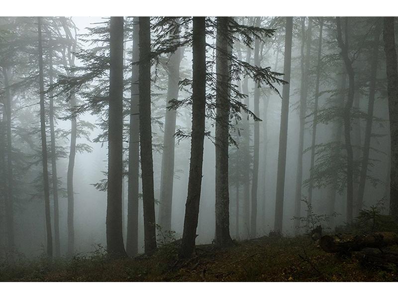Лес в тумане 1588
