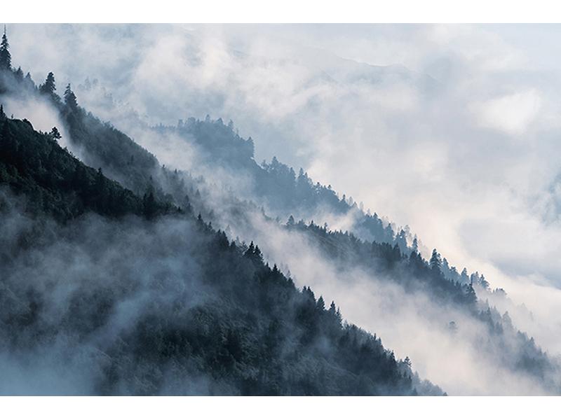 Лесной склон 1581
