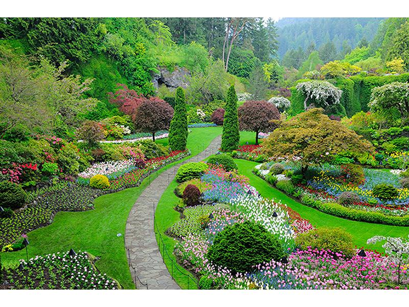 Летний сад 1575