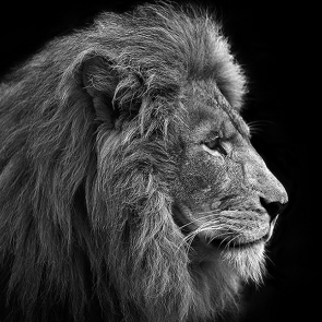 Царь лев