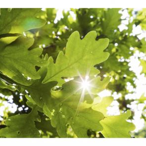 Листья 4980