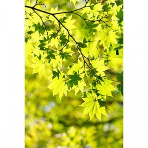 Листья 4985