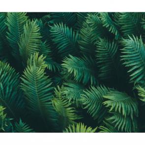 Листья 4989