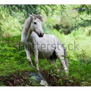 Лошади 5657