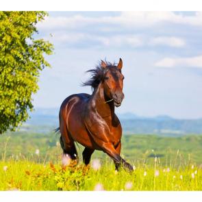 Лошади 5659