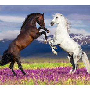 Лошади 5662