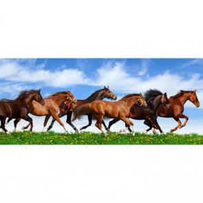 Лошади 5663