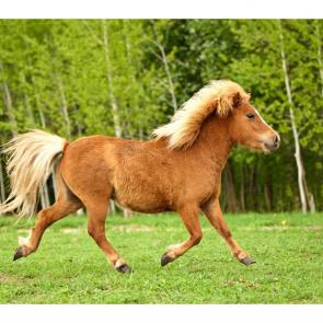Лошади 5665