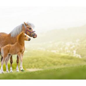 Лошади 5666