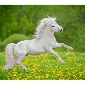 Лошади 5667