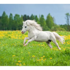 Лошади 5669