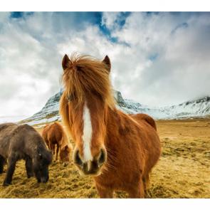 Лошади 5680