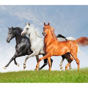 Лошади 5683