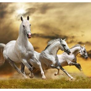 Лошади 5684