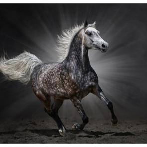 Лошади 5686