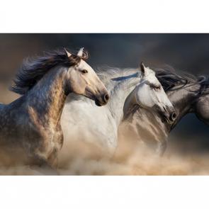 Лошади 5690