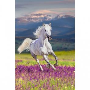 Лошади 5691