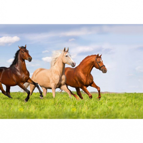 Лошади 5692