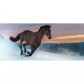 Лошади 5694