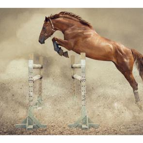 Лошади 5695