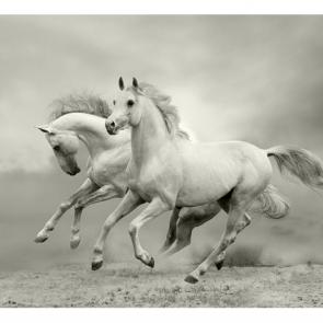 Лошади 5696