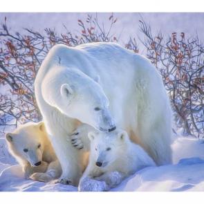 Медведи 5698
