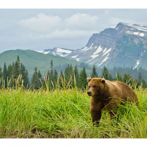 Медведи 5701
