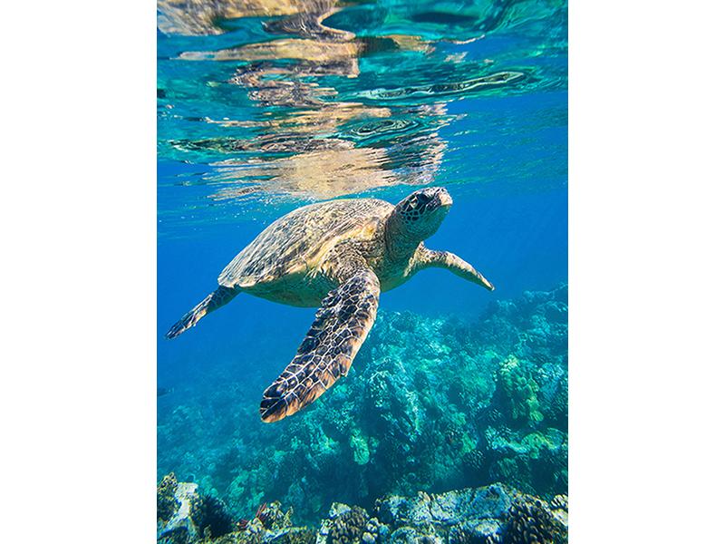 Морская черепаха 2376